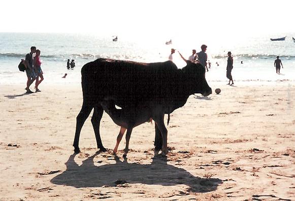 Baga, la plage
